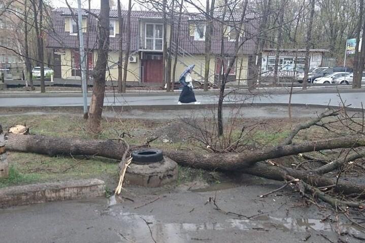 Майский циклон 2018 года валил деревья, затопил улицы, есть пострадавшие!